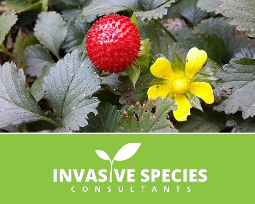 Invasive Species Consultant