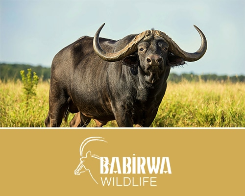 Babirwa Wildlife